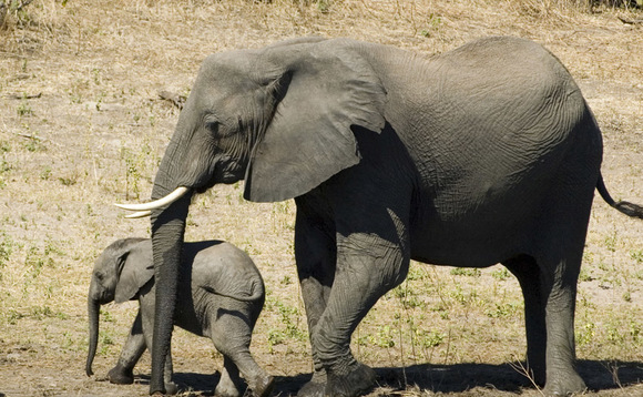 Ditch the elephant powder
