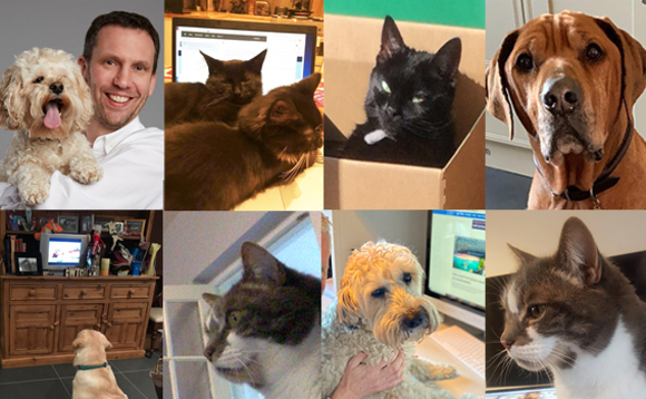 'My cat keeps giving me the stink eye': Self-isolating channel bosses and their pets